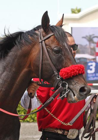 Del Mar Acclamation Out Of Pacific Classic Daily Racing