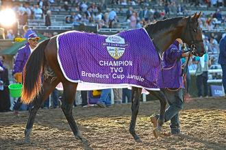 Storm the Court after winning the Breeders Cup Juvenile at Santa Anita