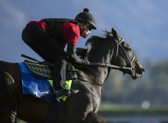 Eight Rings trains at Santa Anita Park on Oct. 20