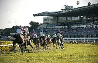 Turf racing at Golden Gate Fields