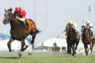 Breeders Cup Juvenile Turf Field Still A Work In Progress