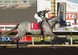 No joke: Greyvitos gets first win in Bob Hope Stakes
