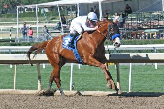 Kentucky Derby Pedigree Profile Justify Daily Racing Form