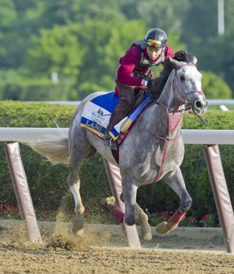 Lani Retired To Arrow Stud In Japan Daily Racing Form
