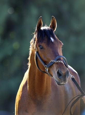 Four Time Grade 1 Winner Little Mike Retired To Old