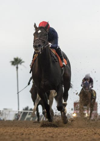 Majestic Heat relishes dirt surface in Betty Grable win