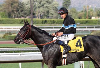 Record Entries For Breeders Cup 15 For Classic Daily
