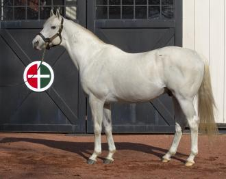 Sires of the 2016 Kentucky Derby: Tapit | Daily Racing Form