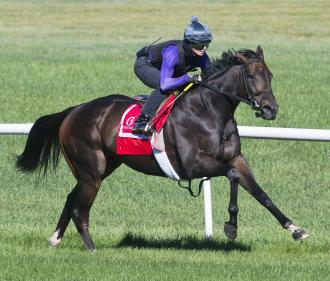 Tepin Likely To Face Seven In Woodbine Mile Daily Racing