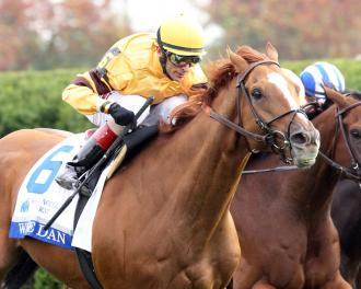 Wise Dan Injured Will Miss Breeders Cup Daily Racing Form