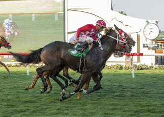 Daily Racing Form Horse Racing Entries Results Pps