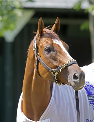 Woodbine Mile Likely Comeback Spot For Wise Dan Daily