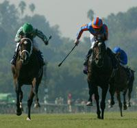 High Chaparral Johar Inseparable At Wire Daily Racing Form