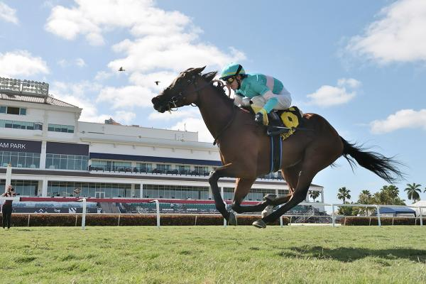 La Signare wins the Sand Springs Stakes at Gulfstream Park