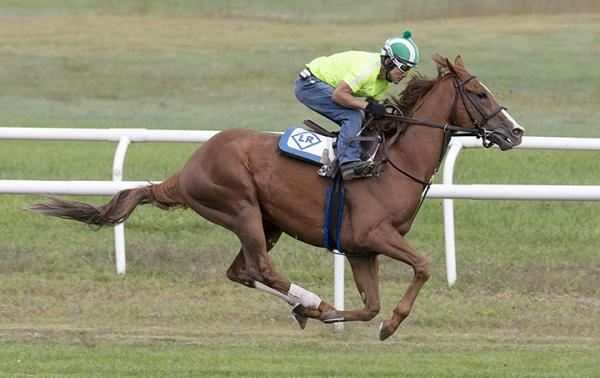 Voodoo Song New Addition To Mandella Stable