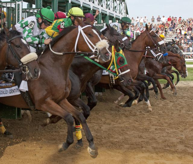 Start of the 2011 Preakness