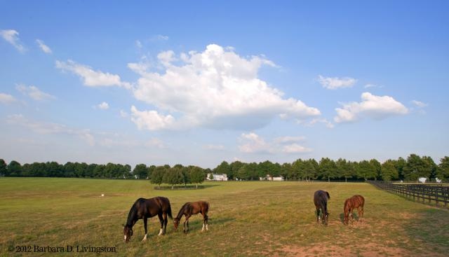 Rachel Alexandra and Hot Dixie Chick and their foals