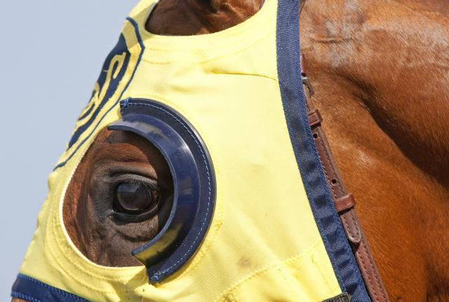 French cup blinkers