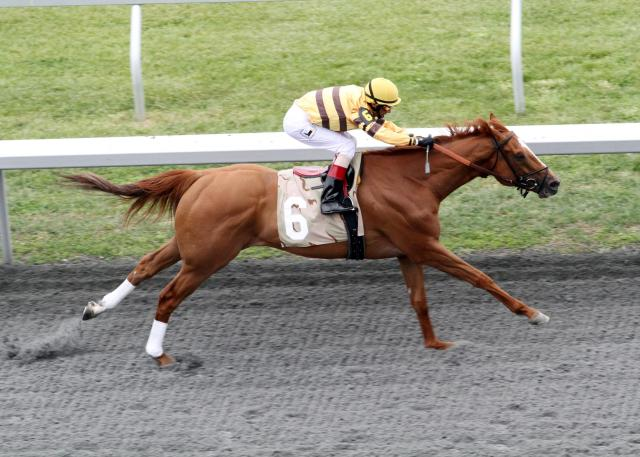 Wise Dan wins Ben Ali