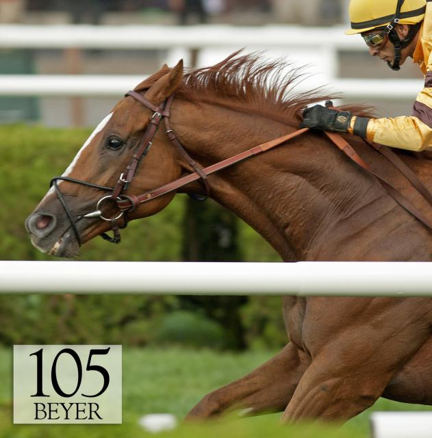 Wise Dan wins the Shadwell Turf Mile