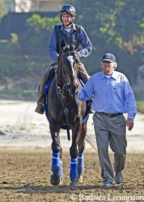 2010 Horse Of The Year Zenyatta A Photographic Tribute