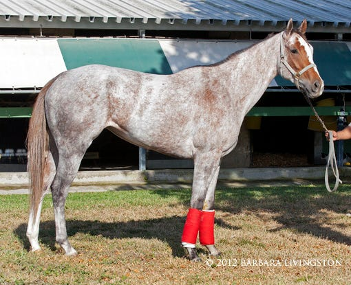 Perfectly Gray Or Hey Funny Face Daily Racing Form