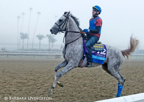 Breeders Cup 2013 A Photographic Look Back Daily