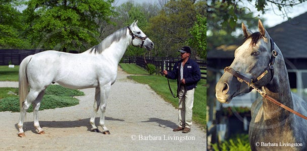 In Memoriam Horses Of 2010 Daily Racing Form