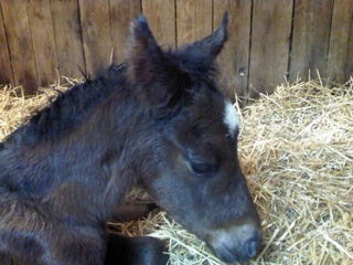 Court Vision first foal