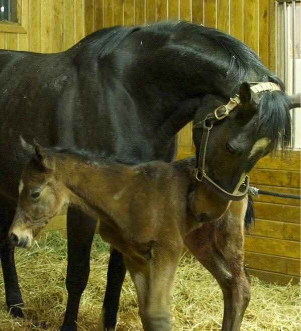 Rachel Alexandra with Bernardini foal